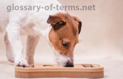 สุนัข ดมกลิ่นทางการแพทย์ที่เชี่ยวชาญสามารถตรวจหา coronavirus ในมนุษย์ได้หรือไม่สุนัขได้รับการฝึกให้ตรวจจับกลิ่นของมะเร็งมาลาเรียและพาร์คินสัน