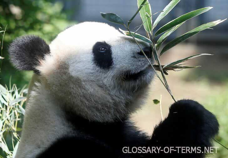 จีนเผย แพนด้ายักษ์ไม่ใกล้สูญพันธุ์แล้ว แพนด้ายักษ์ไม่ได้ถูกจัดประเภทว่าใกล้สูญพันธุ์อีกต่อไป แต่ยังมีความเสี่ยงอยู่ เจ้าหน้าที่จีนกล่าว การจัดประเภท